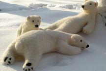Bears, Bears and more Bears... / by Kathy Mackay