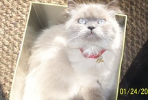 MY KITTY / by •*´¯`*•.¸ .. ¥ .. ¸.•*´¯`*•Robin•*´¯`*•.¸ .. ¥ .. ¸.•*´¯`*• •*´¯`*•.¸ .. ¥ .. ¸.•*´¯`*• Whitley •*´¯`*•.¸ .. ¥ .. ¸.•*´¯`*•