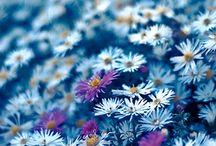 Pretty Things / by Aparna Mohan