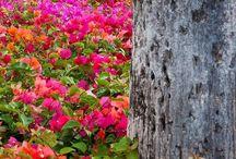 Tajemství a krása lesa