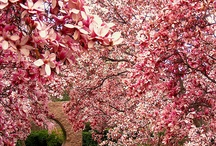 Favorite Places & Spaces / by Elisa E