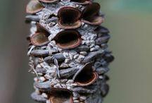 plody a semena k inspiraci / Tvarová rozmanitost v přírodě