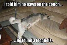 humor hond