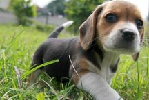 Beagle Babies / by Beth Graham