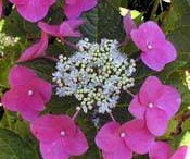 Pretty Flowers / by Raylene Beebe Swanson Kruger