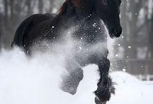My horse's