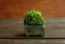 terrarium / gardening