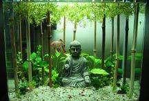 Aquario + Plantas