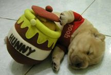 Too cute or funny pics / by Lisa Gniech