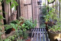 Fire escape gardening