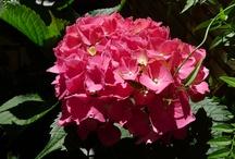 Mis flores.