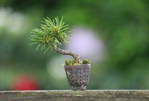 超ミニ盆栽 Mini bonsai