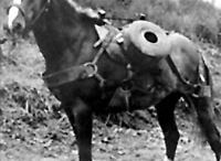 Korean War / by Carol Kuhfahl