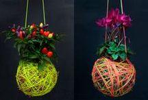 fiori appesi
