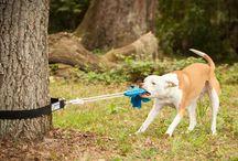 Koirat / Koira juttuja