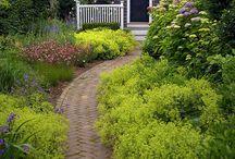 Garden: Paths