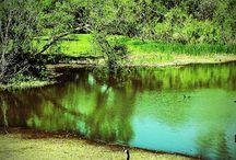 Digital Manipulation of Photographs / I enjoy playing with Photoshop Elements to create artsy photos