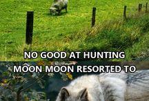 Moon moon memes