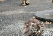 Community Cats / Ferals