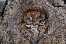 <3 Owls / Just a bunch of pictures of Owls.