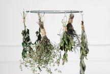 Herbs / by Caitlin Marie