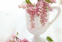 | Flower |
