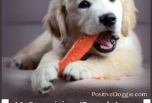 Dogshealthy foods for dogs