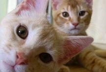 Cats / Kitty kats. So pretty