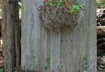 Gamle dører i hagen