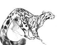 rajzok állatok