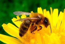 design abeille
