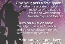 Dog Safety / Tips and information to help keep your dog safe and well. / by Dogster