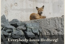 Enjoying Work / We believe you should be passionate about your work, enjoy what you do and have fun!  / by Hedberg Supply
