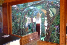 Aquariums / Having the beauty of the water in your own living room :)