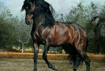 Horses / by Luis