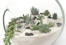 terrarium ==pt base cu flori