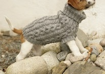doggy wear