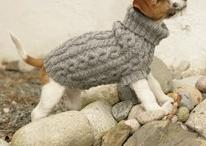 doggy wear
