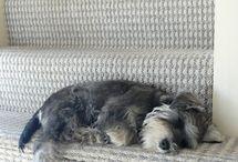 Schnauzers ❤️ / Dogs