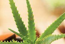 plantas para pessoas inexperientes