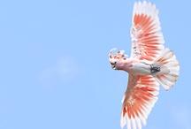 Pink kakadu ❤️