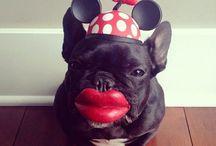 Bulldog Francês *-* / my favorite!!!!
