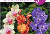 Selections du Jardin des Fleurs