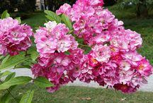 Blumen umarmen mich mit ihrer Schönheit ☀️ / Blumen riechen nach Liebe  ☀️