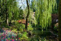 Naturalized Garden, natural garden, naturnah Gärtnern, natural gardening, natural gardener, wild garden,  / Naturalized Garden, natural garden, naturnah Gärtnern, natural gardening, natural gardener, wild garden,