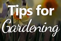 Tips for Gardening / Useful information for growing flowers and veggies!