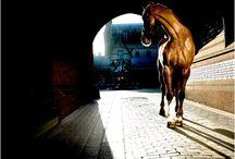 Horses / by Merissa Beard