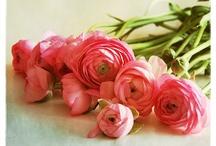 Flowers / by Jeanne-Marie B