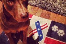 Our patriotic floor mats / Some of our pawsome pet fans in a paw-parazzi moment on their patriotic pet mats...say that ten times fast! / by Pets for Patriots