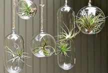 Idées végétales